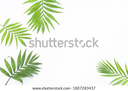 Green palm leaves r Golden cane palm, Areca palm leaves, coconut leaves or Tropical foliage isolated on white background   Stock fotó ©