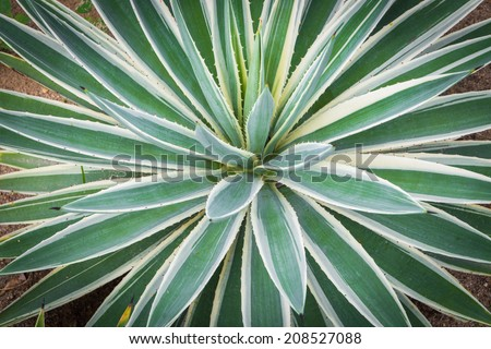 Green palm plant of sand