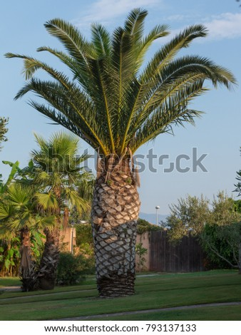 Free Photos Palm Trees In The Vase Palm Palm Trees Avopix