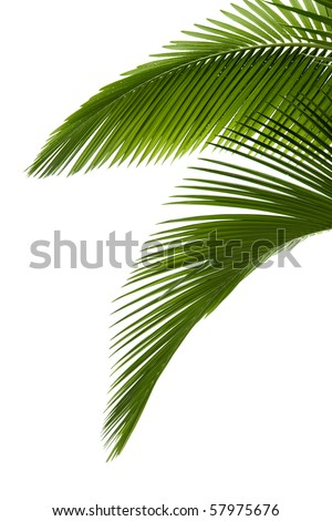 Green palm tree on white background #57975676