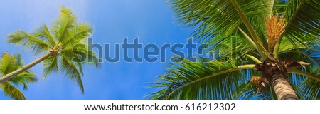 Green palms and blue sky. #616212302