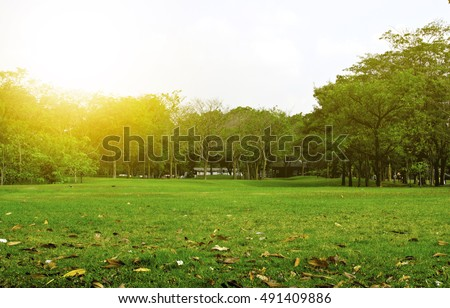 Green Park in City at Sunset. exercise and relax. Green grass and tree in garden at sunset background. #491409886