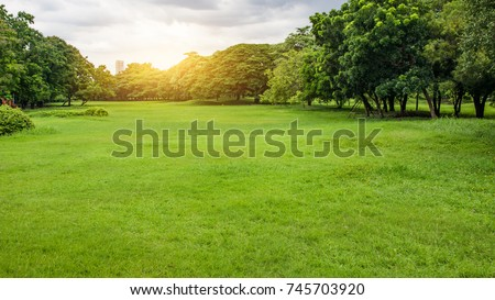 Green Park in City at Sunset. exercise and relax. Green grass and tree in garden at sunset background. #745703920