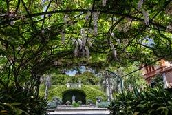 Green park in summer, Italy. Lombardy,  Villa Taranto botanical garden