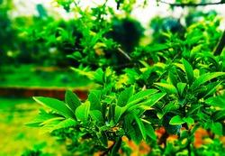 green parks goodmorning nigth sky  blur parks