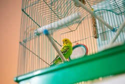 green parrot caged poultry exotic