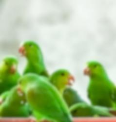 green parrot herd abstract beautiful blur background wild life wallpaper