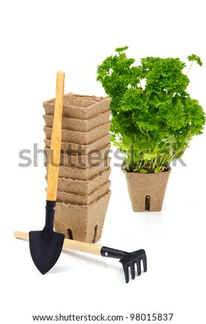 Green parsley in flowerpot with little rake and shovel