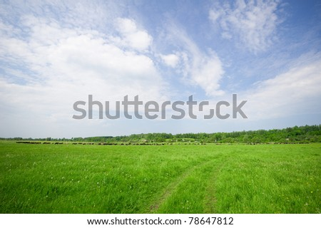 green pasture in the summer, the cows graze on the horizon
