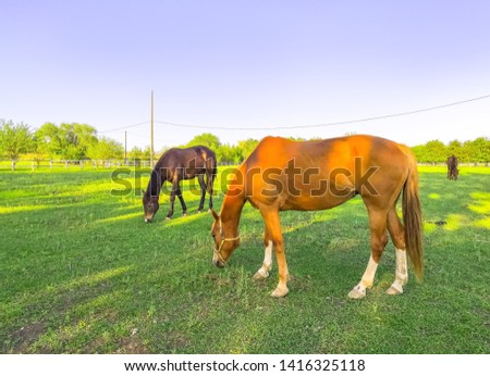 Green pastures of horse farms. Brown and gray horses eating a a grass at ranch summertime.  #1416325118