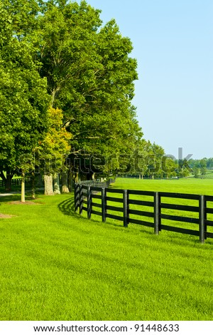 Green pastures of  horse farms. Summer country landscape.