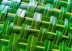 Green pattern weaving of banana leaves. Woven green banana leaves texture, suitable in use for the background. Natural-looking and elegant. Close up pattern of banana leaves weave.