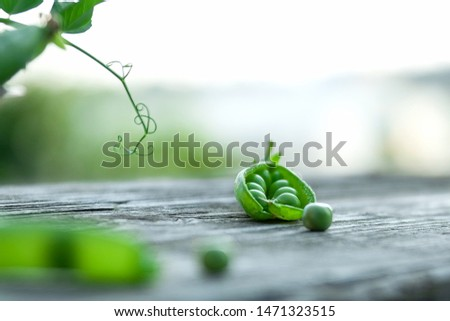 Green peas in the pods. Opened pods and peas. Background with green peas close-up. Free space for text. Selective focus, blur