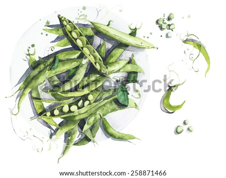 Green peas watercolor painting illustration isolated on white background