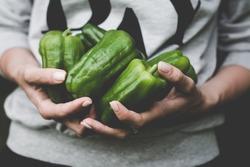Green pepper harvest. Farmer girl holding freshly picked green peppers. Toned image, selective focus