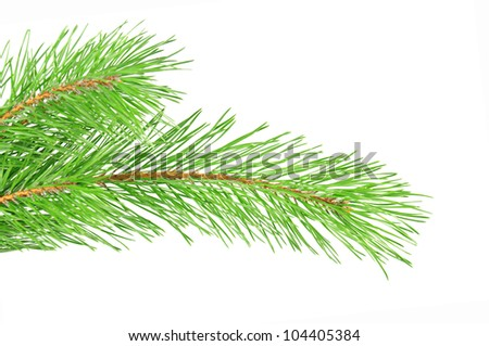 Green pine tree branch isolated on the white #104405384