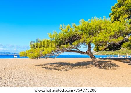 Green pine tree on famous Zlatni Rat beach n Bol town, Brac island, Croatia Foto stock ©