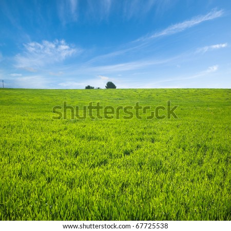 green plain and fluffy clouds in the blue sky