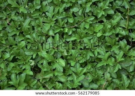 Green plant #562179085