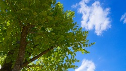 green plant and blue sky background