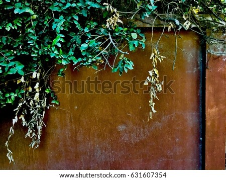 Green Plant and Brown Wall #631607354
