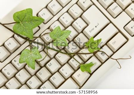 green plant and computer keyboard close up