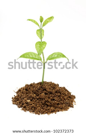 Green Plant and Soil Isolated on white