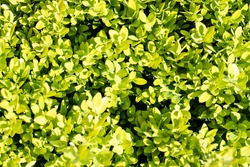 green plant background and plant structure usable as graphic background or decoration, concept of green and different green colors in summer