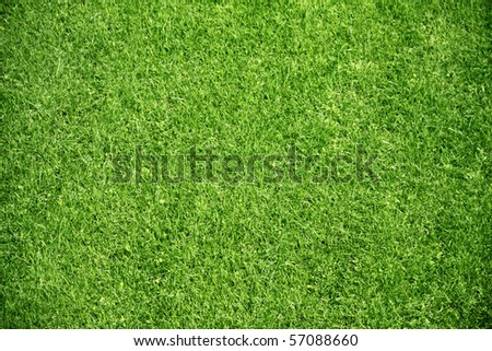 green plant background, young grass