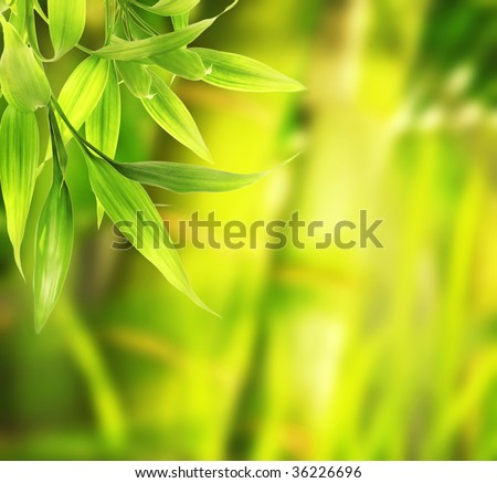 Green plant close-up - stock photo