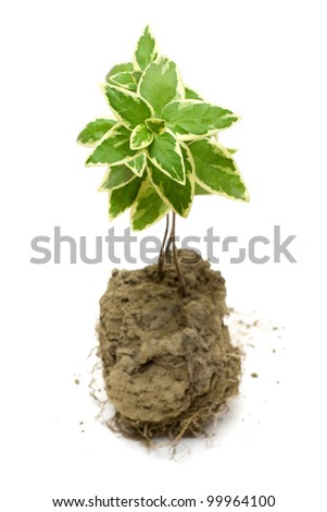 Green plant grow in the soil - stock photo