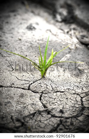 Green plant growing from cracked earth. New life.