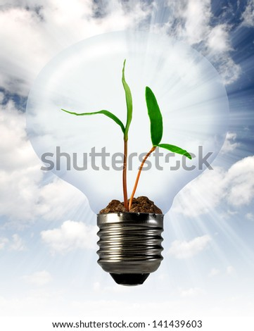 green plant growing in a bulb