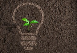 Green plant growing in light bulb silhouette on soil background