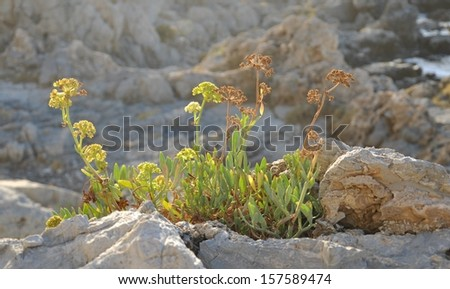 green plant growing on rock
