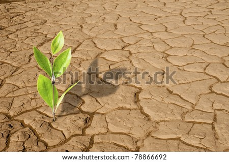 Green plant growing on the dry dead soil land in desert