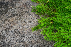 green plant growing on the rock in the garden