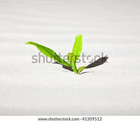 Green plant growing on the sand. New life collection.
