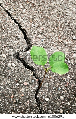 Green plant growing trough cracked ground