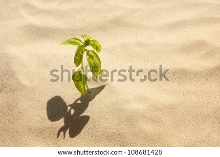 green plant grows in sand loneliness and faith concept