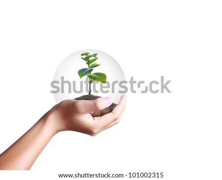 green plant in a hand