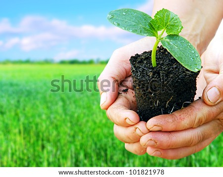 Green plant in arms with green field background. Agriculture concept.