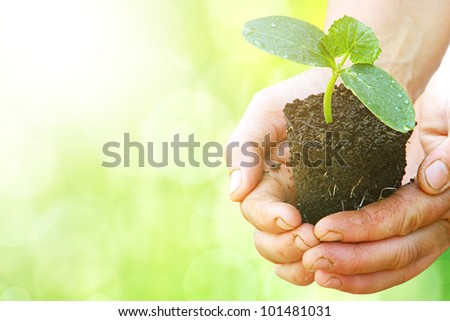 Green plant in arms with sunlight