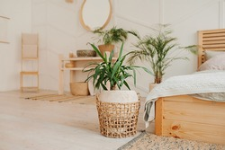 green plant in beige wicker recycled eco basket on bright interior room with cozy bed. Stylish, minimalistic interior of Scandi. Growing and caring plants at home, vertical content inspiration
