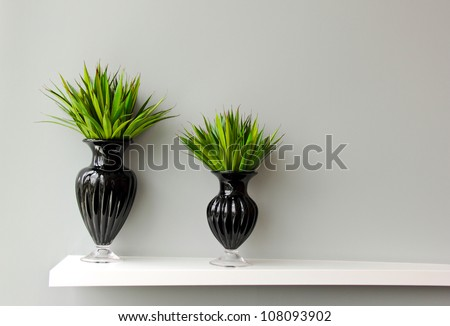Green plant in black vase decorated for room
