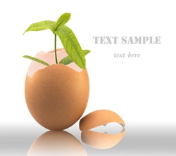 Green plant in egg isolated on white background