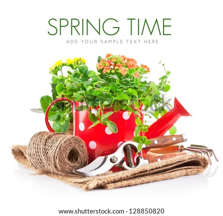 green plant in red watering can with garden tool isolated on white background - stock photo