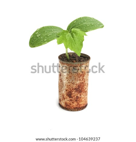 Green plant in rusty cans isolated on white background
