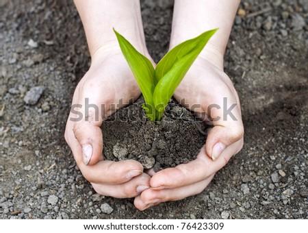 Green plant in woman hands - Shutterstock ID 76423309