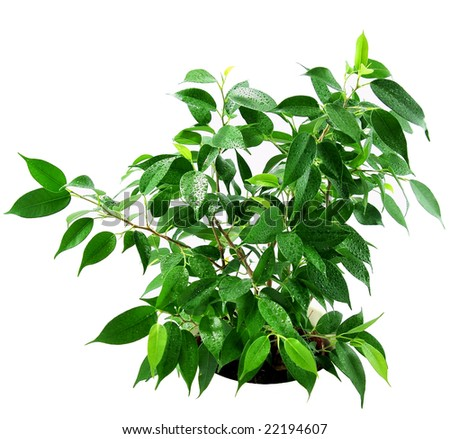 Green plant isolated on white
